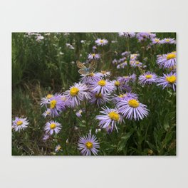 Effervescent Butterfly Canvas Print
