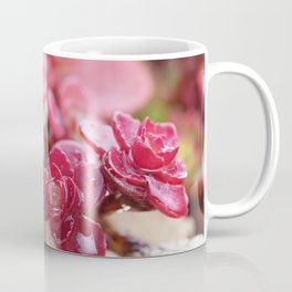 Succulent Garden Cactus Red Flowers Tropical Cacti with drops Coffee Mug