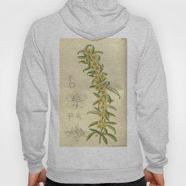 Plagiospermum sinense brachypoda 143 8711 Hoody