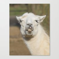 llama Canvas Prints featuring Llama  by Rob Hawkins Photography