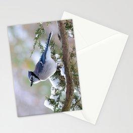 Look Skyward Blue Jay Stationery Cards
