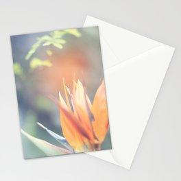 Paradise 3 Stationery Cards
