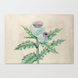 Downy thistle Canvas Print