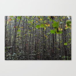 Skinny Trees Canvas Print