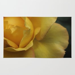 Yellow rose after the rain. Rug