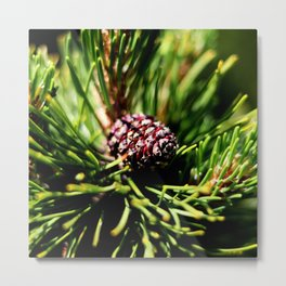 Pine tree branch and pine cone Metal Print
