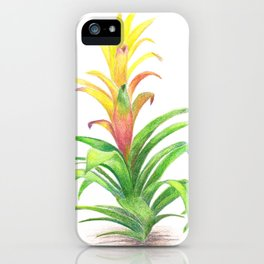 Bromeliad - Tropical plant iPhone Case