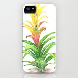 Bromeliad - Tropical plant iPhone Case