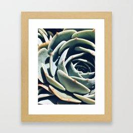 Dry garden 1 Framed Art Print