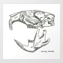 Common Muskrat Skull Art Print
