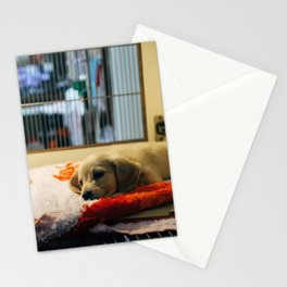 Cute puppy by Markus Winkler Stationery Cards