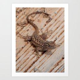 Plateau Fence Lizard, Utah Art Print