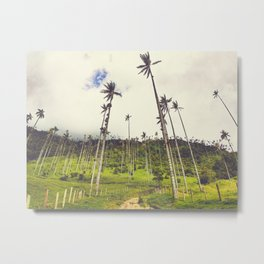 Wax Palms Tower over Cocora Valley Fine Art Print Metal Print