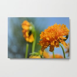 Yellow Flower in Summer Metal Print