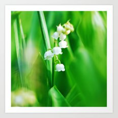 Lily  of the Valley Nature Photography Art Print