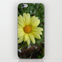 Daisy In The Rain. iPhone Skin