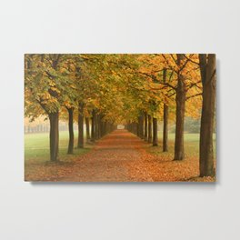 Autumn Trees Metal Print
