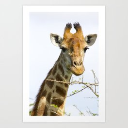 Giraffe - head and neck only Art Print