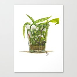 Ginger Tea (or adrak ki chai) Canvas Print