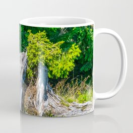 Tree Stump with sprouting Conifer Branch Coffee Mug