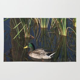 The Duck On The Pond At Papago Park Rug