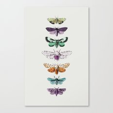 Techno-Moth Collection Canvas Print