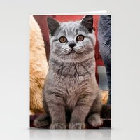 british flag Stationery Cards featuring British Shorthair by Selina Morgan