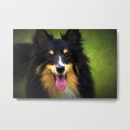 Tri colored Shetland Sheepdog Sheltie Metal Print