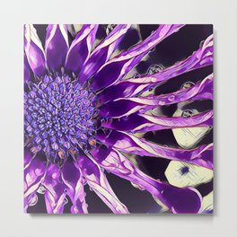 African Daisy in Manipulated Purple Metal Print