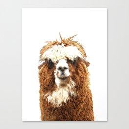 Alpaca Portrait Canvas Print