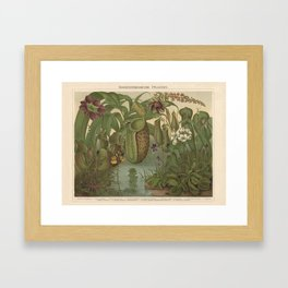 Antique Carnivorous Plants Lithograph Framed Art Print