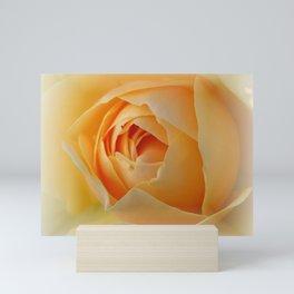 Yellow Graham Thomas Rose Mini Art Print