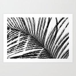 Plume- A Feather Study 2 Art Print