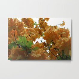 Pop Of Orange Metal Print