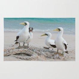 Masked Boobies on a beach Rug