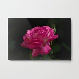 Rose For Eva Metal Print
