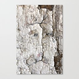 White Decay I Canvas Print