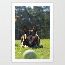 Onea, Australian Cattle Dog Art Print