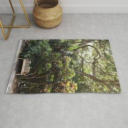 The Reading Bench & The Croton Tree Rug