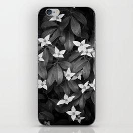 Chinese Evergreen Dogwood iPhone Skin