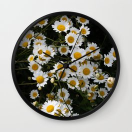 Daisies in groups at sunset Wall Clock