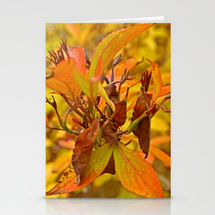 Autumn colour Stationery Cards