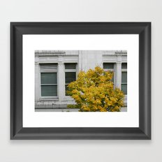 a beautiful tree with leaf that turned yellow against a white building in Seattle Framed Art Print