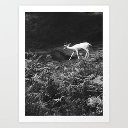 Black&White Deer Art Print