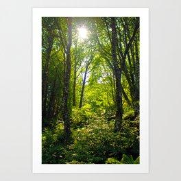 Green Sunny Forest Art Print