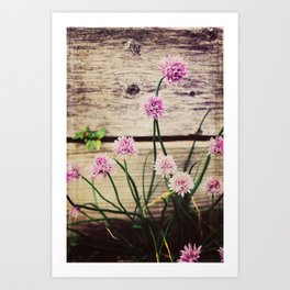 COUNTRY CLOVER Art Print