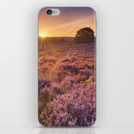 Blooming heather at sunrise at the Posbank, The Netherlands iPhone Skin