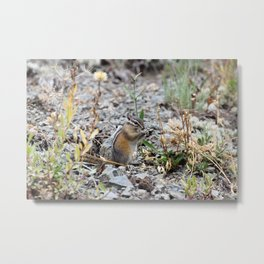 Chipmunk in Landscape Metal Print