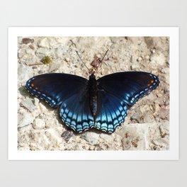 butterfly 2015 II Art Print