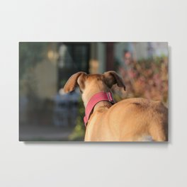 Lua Greyhound Metal Print